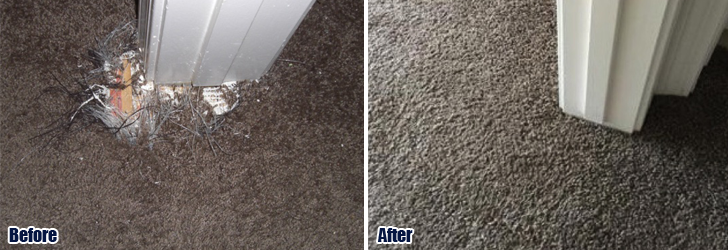 Pet Damaged Carpet 321 222 9587 1 Repair Orlando